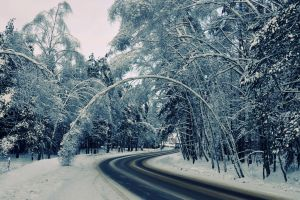 snow winter road nature forest
