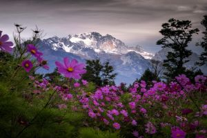 snowy peak clouds shrubs china mountains wildflowers landscape nature spring trees