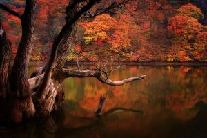 south korea reflection colorful lake water trees landscape fall forest dead trees nature