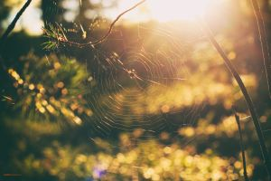 spiderwebs forest sunset nature trees bokeh