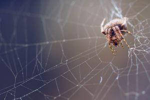 spiderwebs nature macro spider