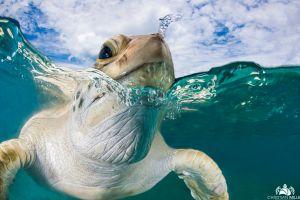 split view turtle photography animals sea