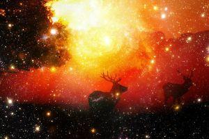 star trails animals digital art stars trees