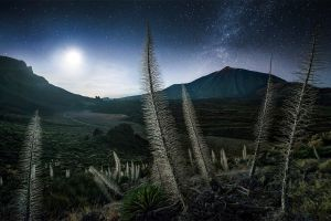 starry night shrubs spain milky way max rive landscape moonlight nature mountains tenerife