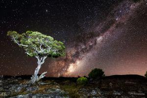 stars landscape trees