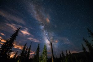 stars night trees forest
