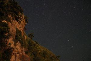 stars trees starry night landscape night starred sky