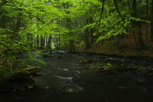 stream forest green wet trees rocks river foliage