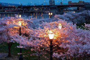 street street light trees