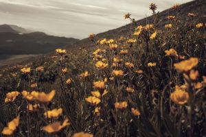 summer yellow flowers overcast depth of field field plants photoshop landscape wildflowers wilderness flowers nature macro