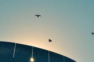 sun birds sky