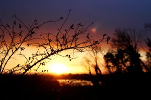 sun landscape branch plants