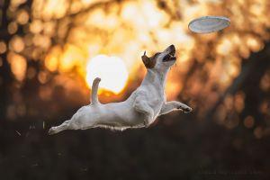 sunlight animals dog photography jumping bokeh