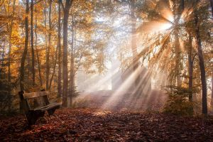 sunlight forest mist park sun rays nature bench landscape fall leaves trees