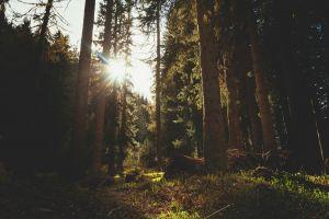 sunlight forest trees nature sun