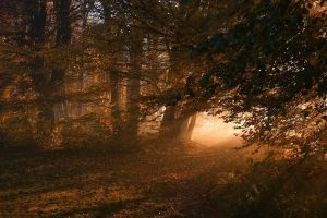 sunlight mist path landscape fall forest nature leaves