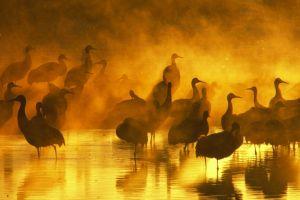 sunlight silhouette birds animals