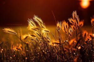 sunlight text field plants