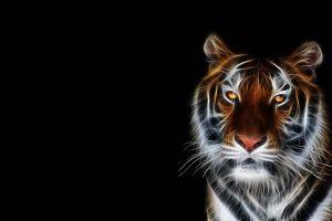 tiger yellow eyes animals big cats simple background digital art fractalius