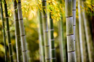 tree trunk bamboo nature