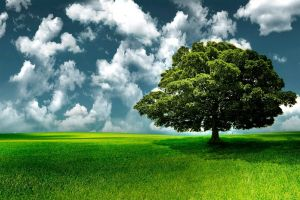 trees clouds nature landscape grass