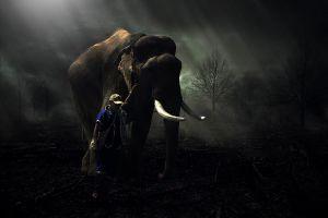 trees elephant men lights
