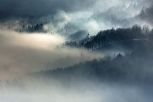 trees fall landscape mountains nature forest mist