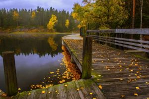 trees fall leaves walkway landscape water fence lake forest nature
