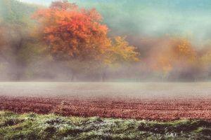 trees hills frost grass landscape austria fall field nature mist cold
