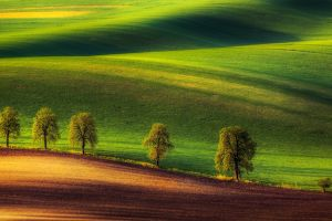 trees hills ground green