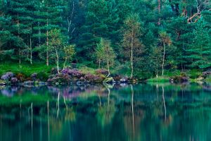 trees lake green grass nature wildflowers forest landscape spring reflection england