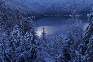 trees landscape forest mountains morning lake winter snow cold nature calm