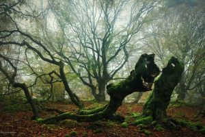 trees landscape forest