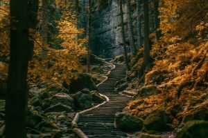 trees landscape germany fall stones dark path stairs hills forest nature