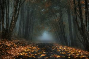 trees landscape road morning nature dark leaves fall mist forest