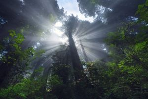 trees landscape sunlight nature spring sun rays forest green wildflowers