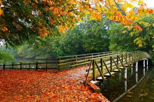 trees landscape walkway overcast bridge fall architecture nature river leaves