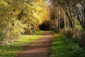 trees landscape wood