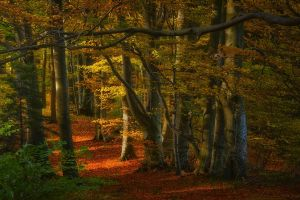trees leaves forest sunlight path nature fall landscape