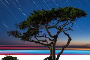trees long exposure digital art plants
