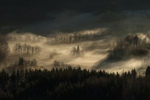 trees mist nature forest landscape hills morning