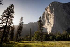 trees nature cliff sunlight