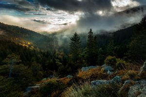 trees nature clouds mist forest sky fall landscape mountains pine trees