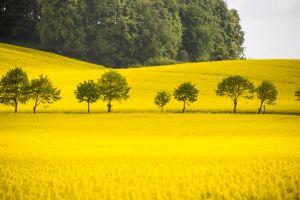 trees nature field yellow