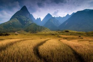 trees nature mountains landscape vietnam field hills forest clouds spikelets