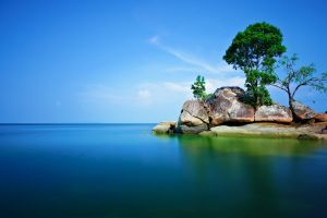 trees nature sea rock alone landscape