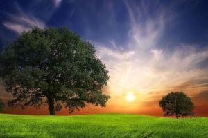 trees nature sky grass