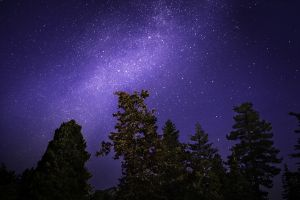 trees night sky nature