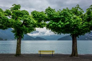 trees outdoors bench water