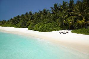trees plants landscape beach tropical